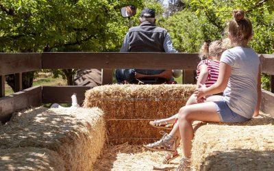 hay-wagon-rides